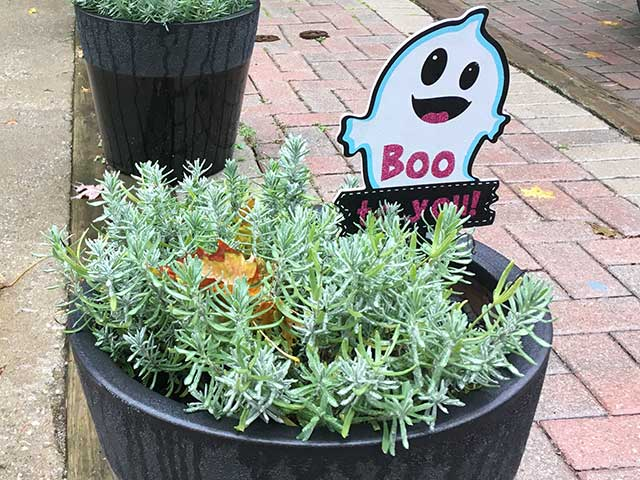 Boo(ブー)
