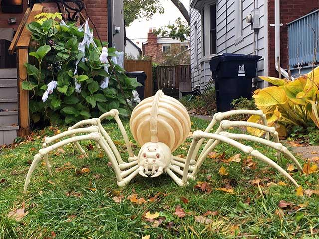 巨大なクモのガイコツ