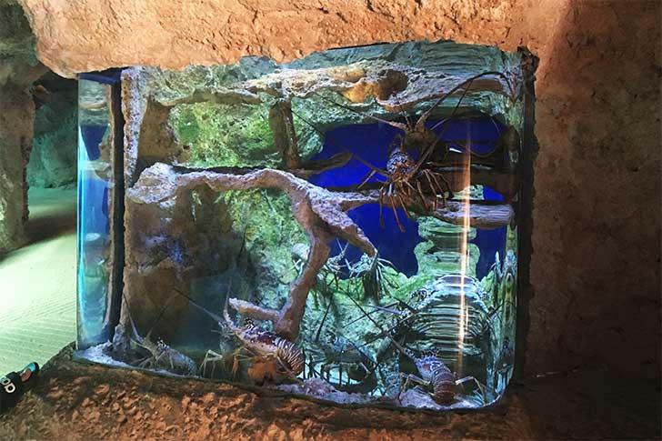 [バハマ]アトランティス水族館CENOTE