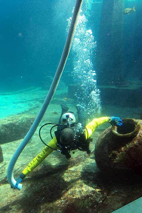 [バハマ]アトランティスの水槽掃除