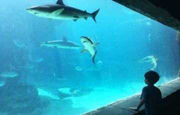 [バハマ]アトランティス水族館
