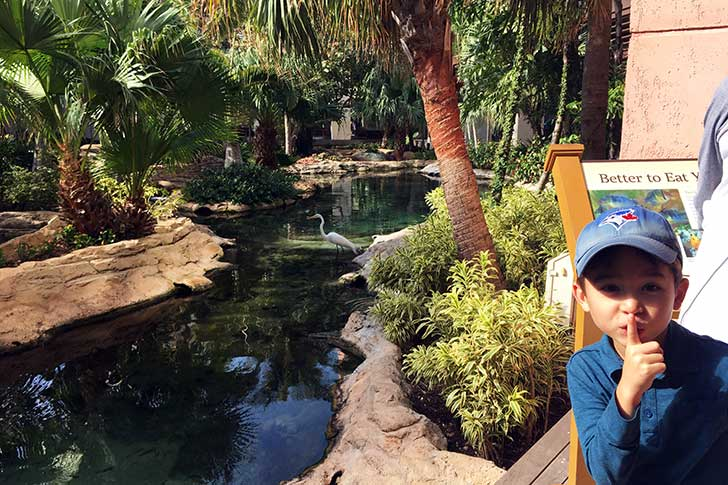 [バハマ]アトランティス COVEにある池にて