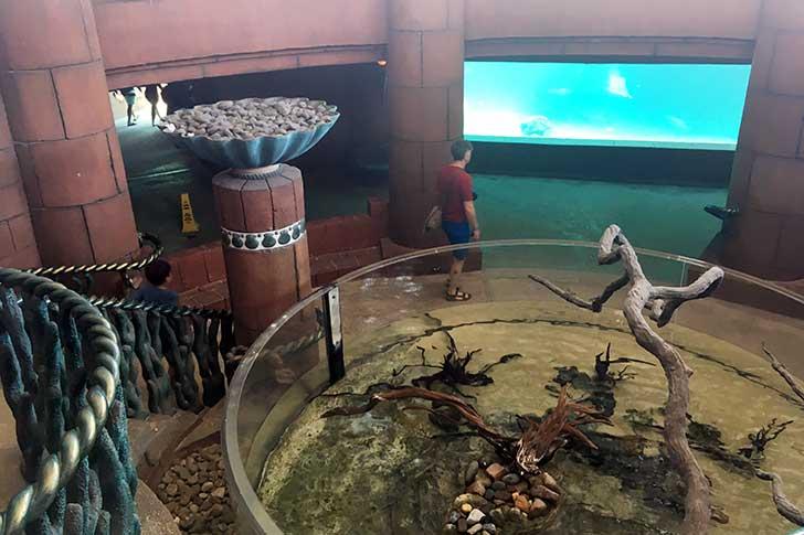 [バハマ]アトランティスのプレデター水族館入り口