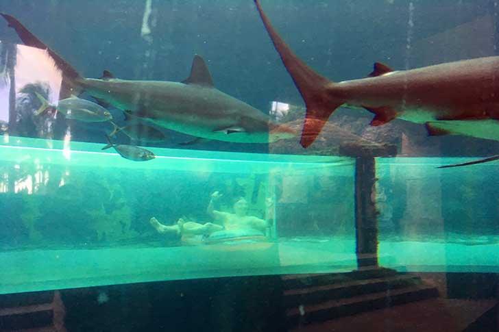 [バハマ]アトランティスのサメ