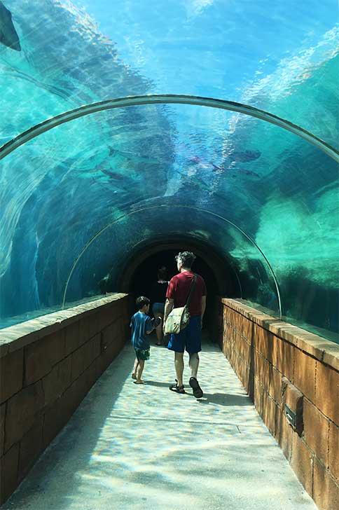 [バハマ]アトランティス水族館トンネル